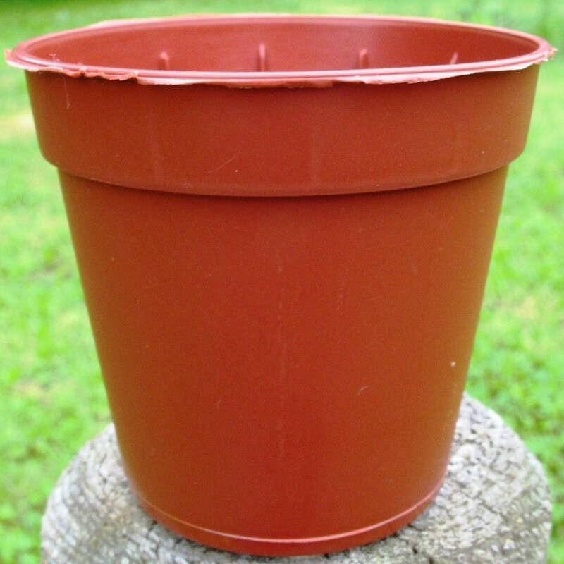 Pots Ronds 5,5 cm /100