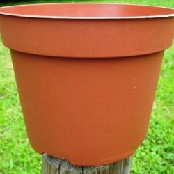 Pots Ronds 12 cm /20