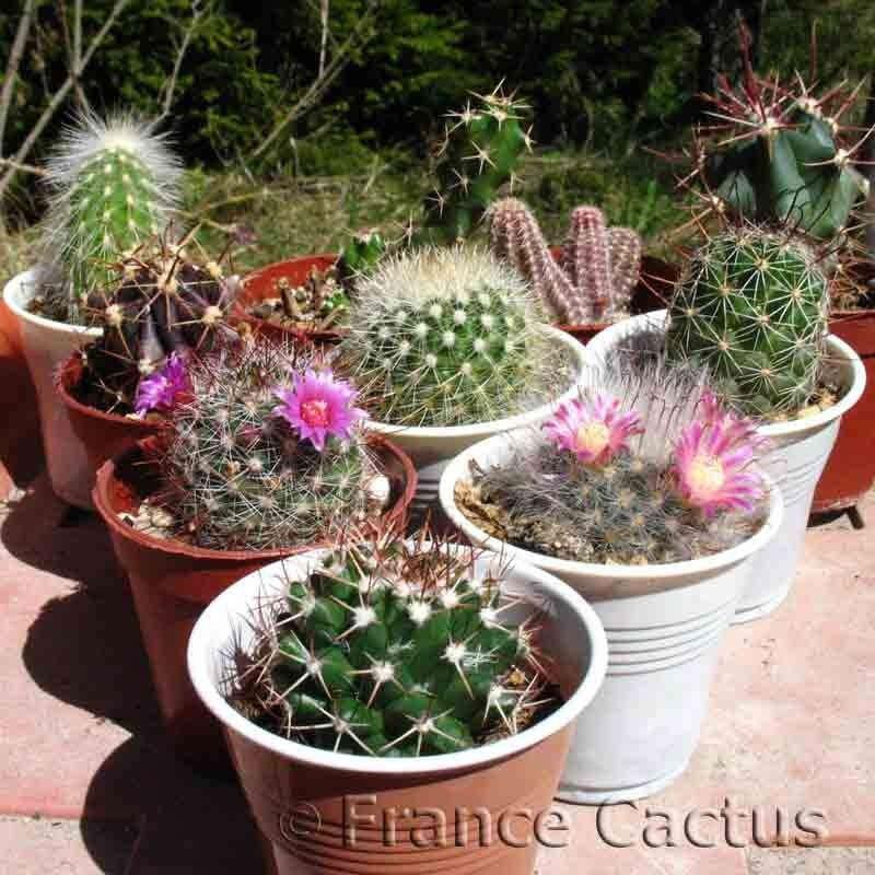 Lot de 10 cactus variés