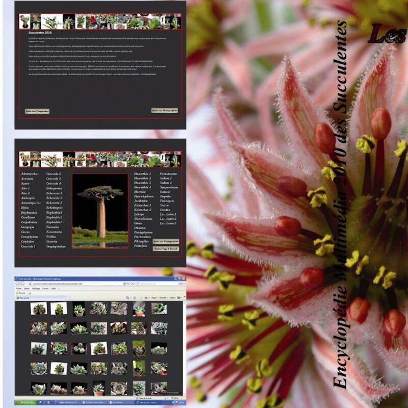 Encyclopédie Photographique des Succulentes 2010